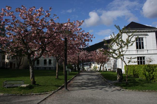 bergenelsk6 Mitt kjærlighetsforhold til Bergen